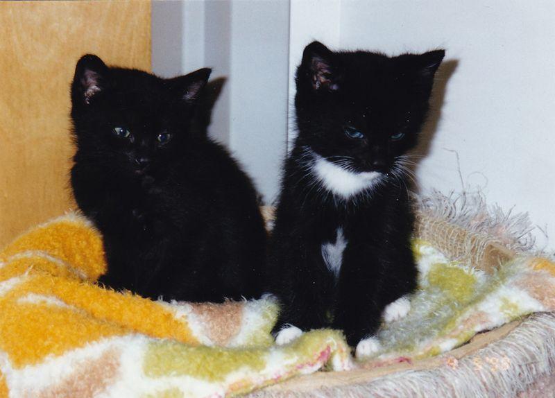 Kitties_0001